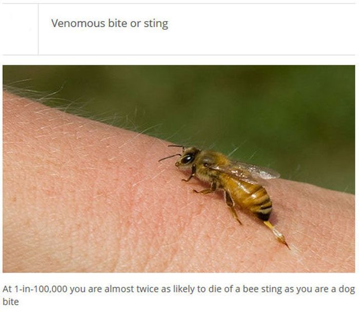 The Most Deadly Things (25 pics)