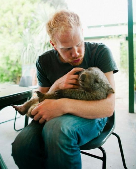 Pet Wombat (9 pics)