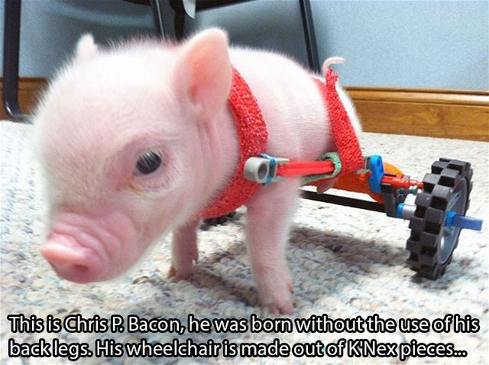 Faith in Humanity Restored. Part 11 (29 pics)