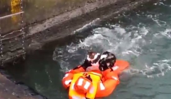 Sailor Rescues a Cat
