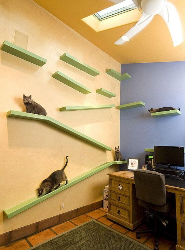 Cat Paradise (8 pics)