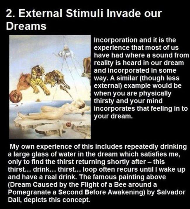 Dream Facts (10 pics)