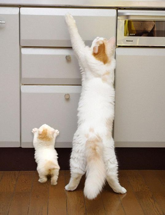 Animals and Their Mini Me Versions (30 pics)