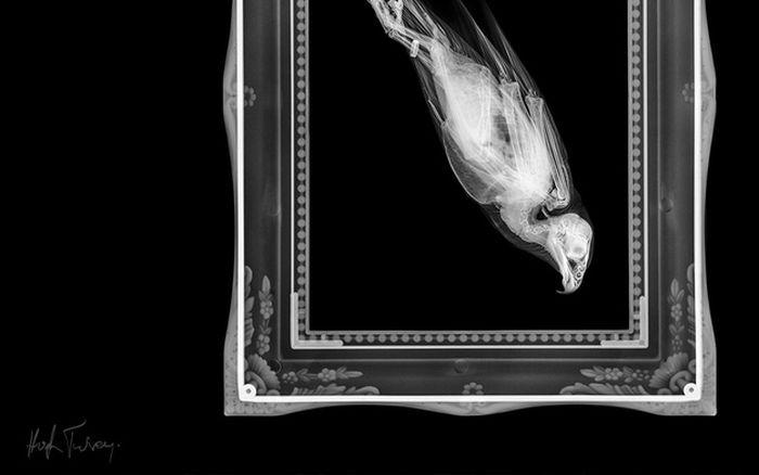 Animal X-Rays (18 pics)