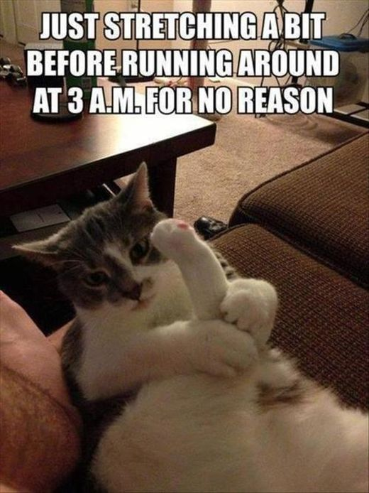 Pictures About Cats (43 pics)
