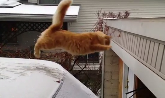 Funniest Cats Jump Fail Compilation
