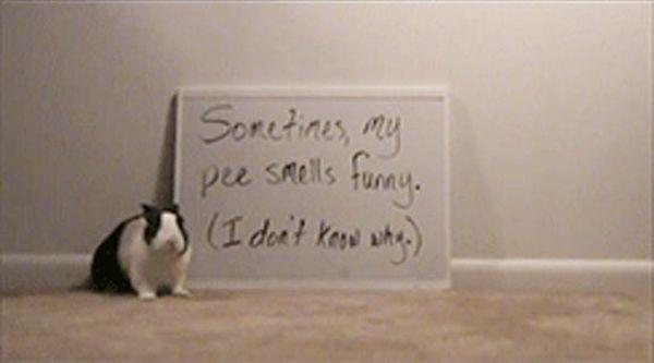 Cute Bunny Shaming (10 pics)