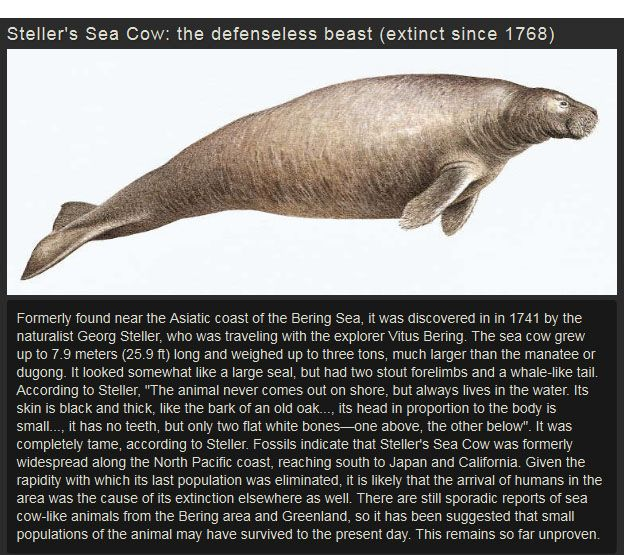 Amazing Extinct Animals (10 pics)
