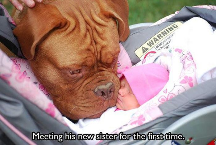 "Animal ""Firsts"" (22 pics)"