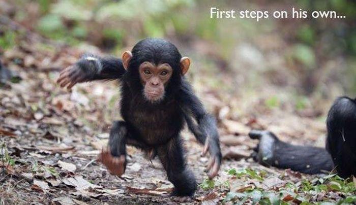 "Animal ""Firsts"" (22 pics)"