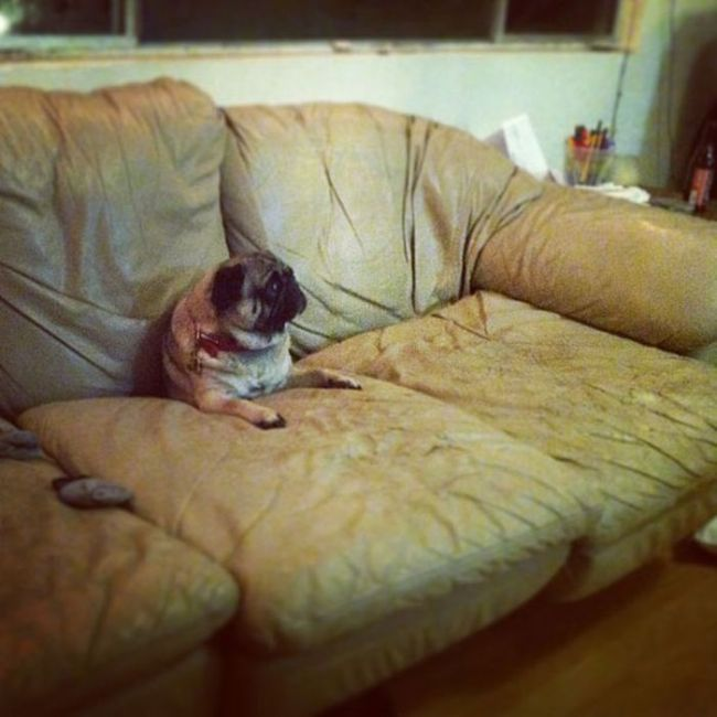 Pets vs Furniture (30 pics)