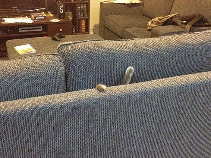 Pets vs Furniture (30 pics)
