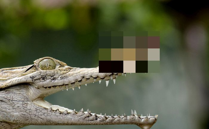 Frog on a Crocodile's Nose (5 pics)
