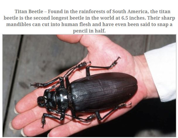 The Largest Insects (10 pics)