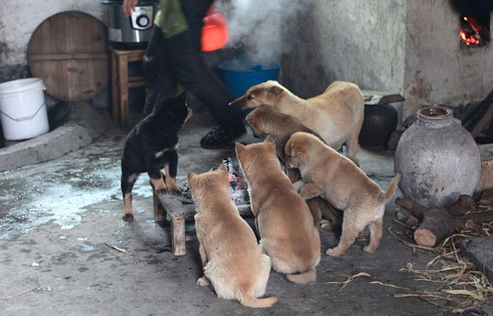 Stray Puppies Trying to Stay Warm (5 pics)