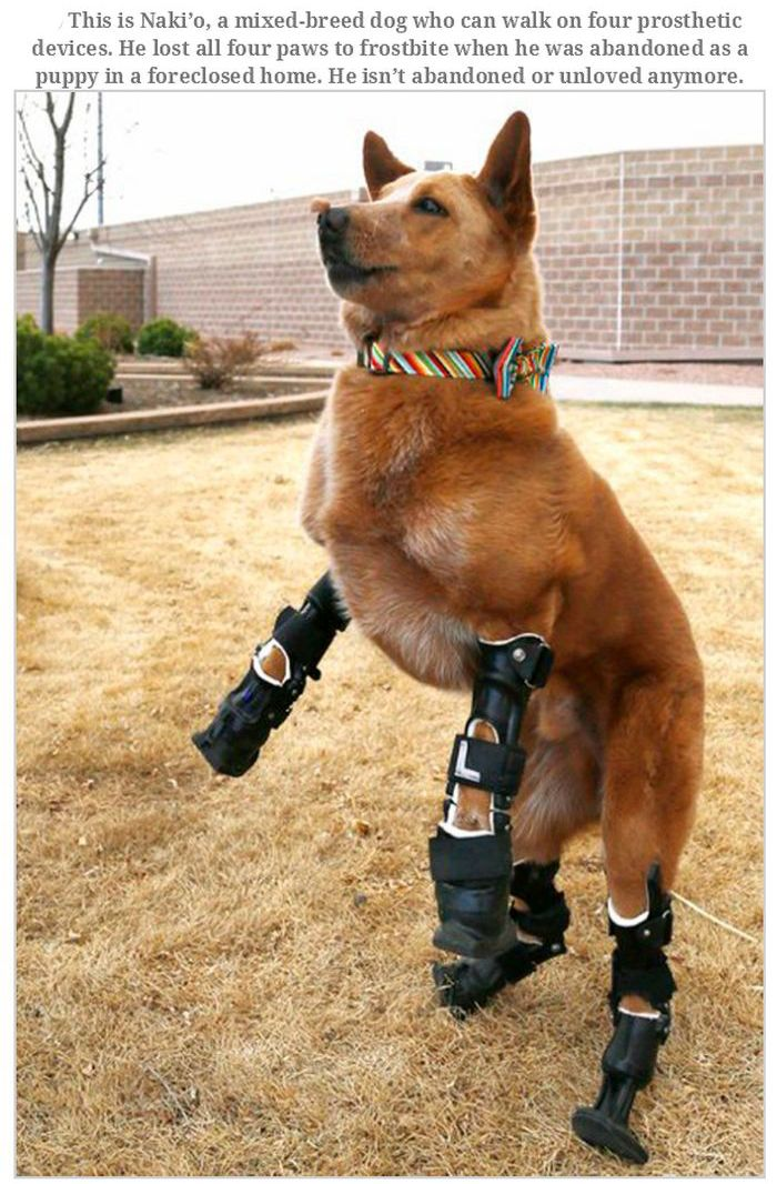 Injured Animals (15 pics)