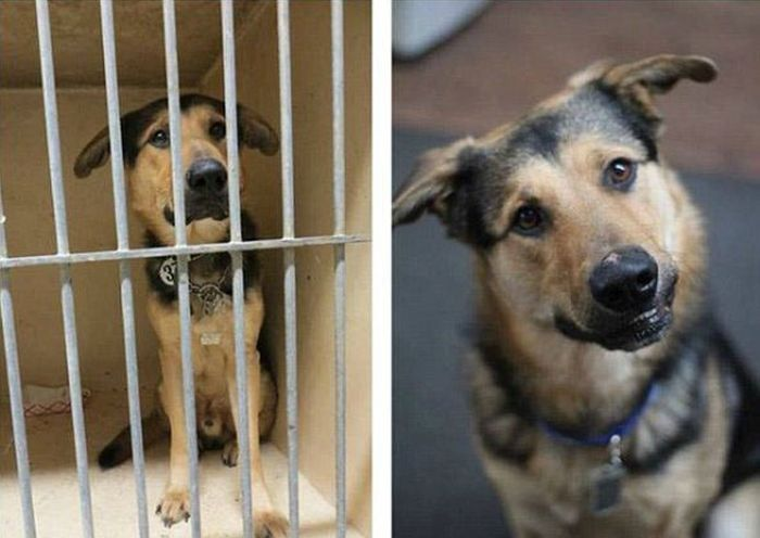 Rescued Pets Before and After the Rescue (23 pics)
