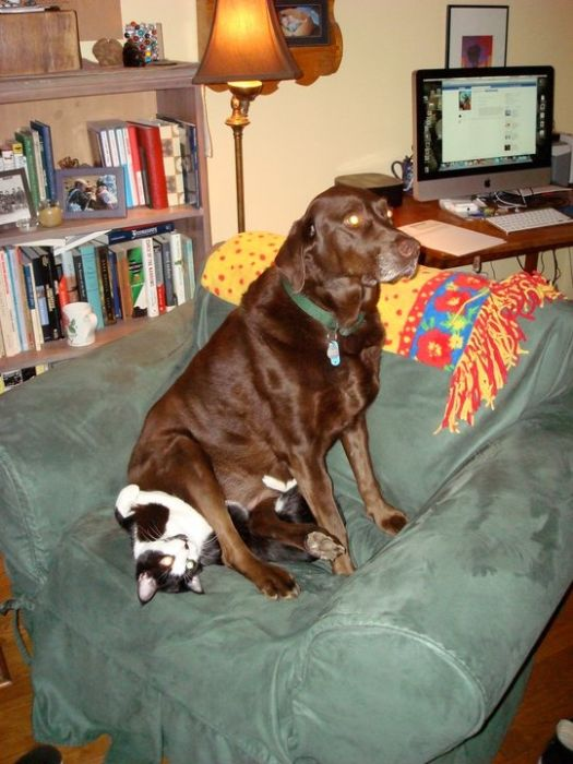 Dogs and Cats (50 pics)
