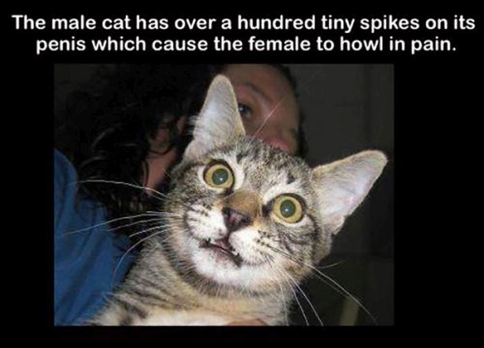 Fun Facts. Part 24 (30 pics)