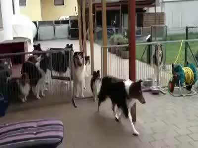 Dogs Are Waiting for Their Turn to Eat
