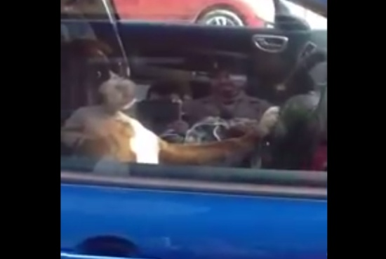 Dog Had Enough of Waiting Inside a Car