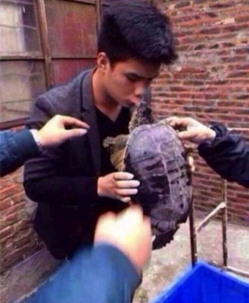 Why You Should Never Kiss a Turtle (5 pics)