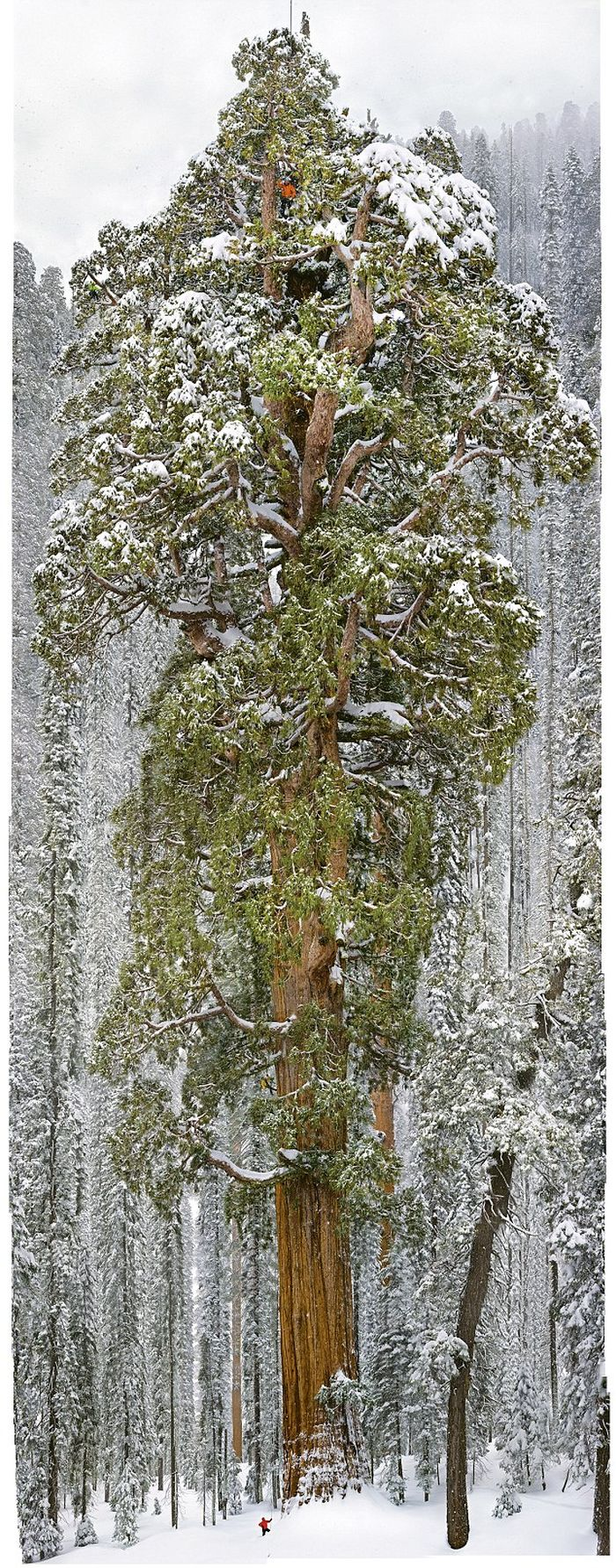 How to Make a Photo of a Giant Tree (7 pics)