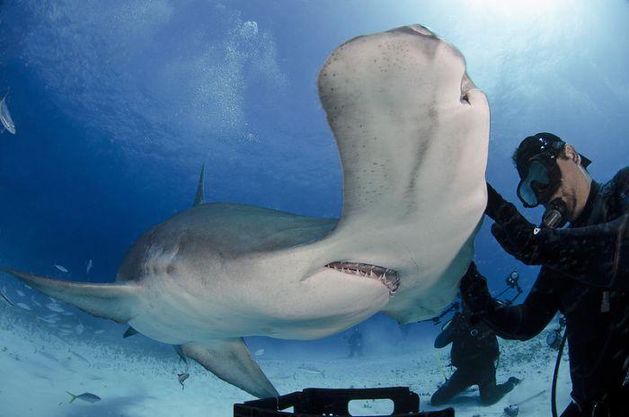 Diver Feeds Shark (5 pics)