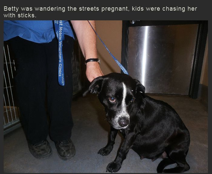 Story of a Pregnant Dog (29 pics)