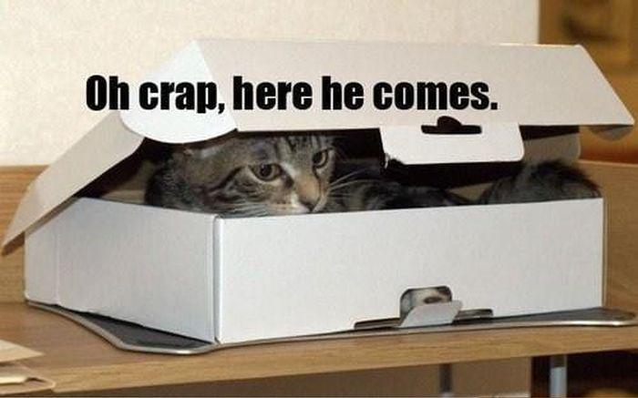 Can I Come In The Box? (5 pics)