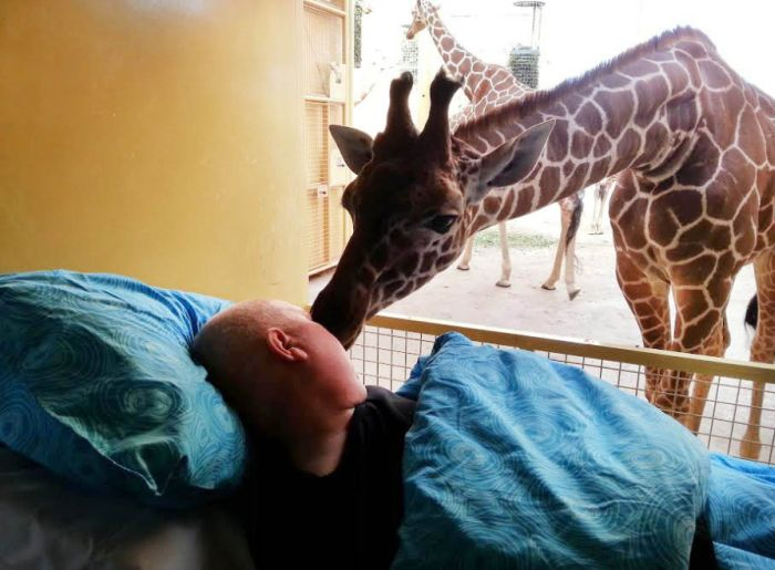 Giraffe Says Goodbye to Dutch Zookeeper Dying of Cancer (3 pics)