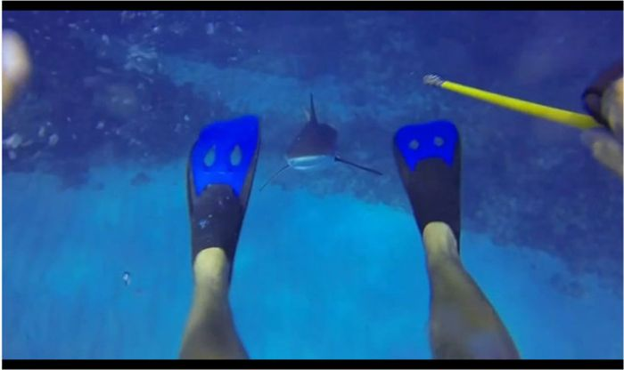 Shark Attack (5 pics + video)