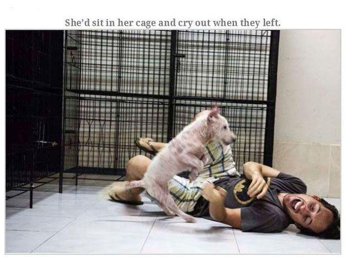 Dog Rescued (14 pics)