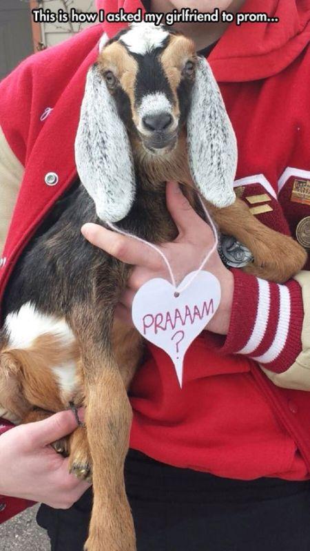 Clever Prom Proposals (24 pics)
