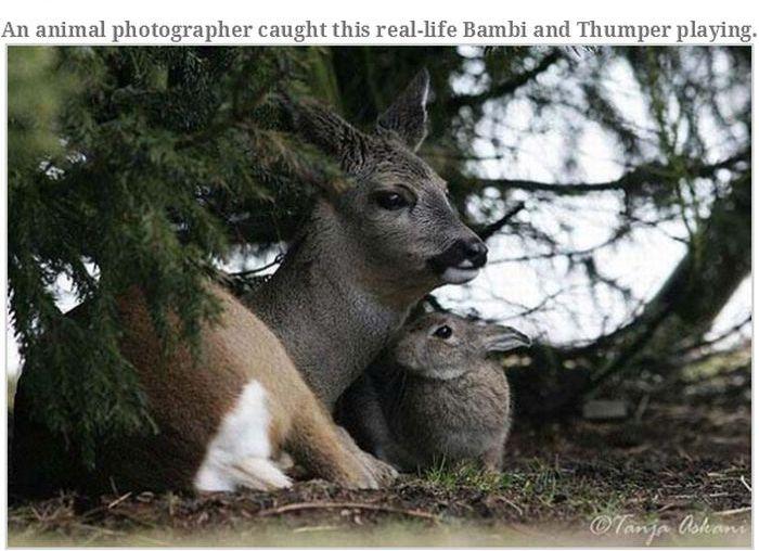 Incredible Animal Stories (43 pics)