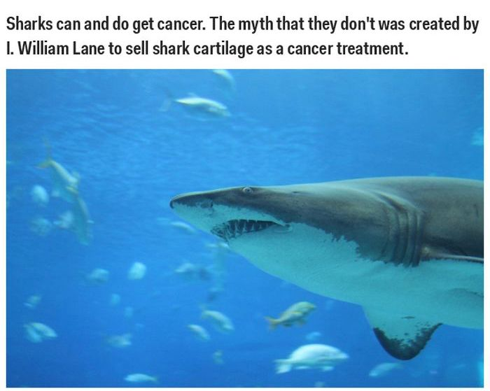 These Science Facts Are Totally Wrong (35 pics)