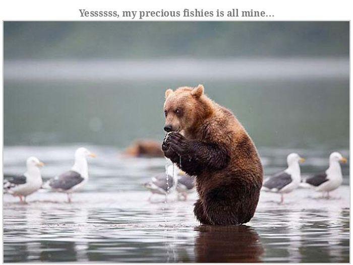 Bears Doing Weird Things (32 pics)