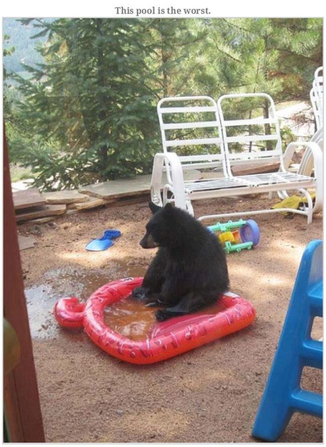 Bears Doing Weird Things (32 pics)
