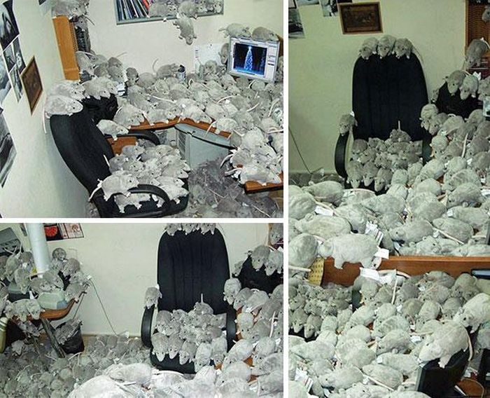 How to Prank Your Coworkers on April Fools' Day (29 pics)