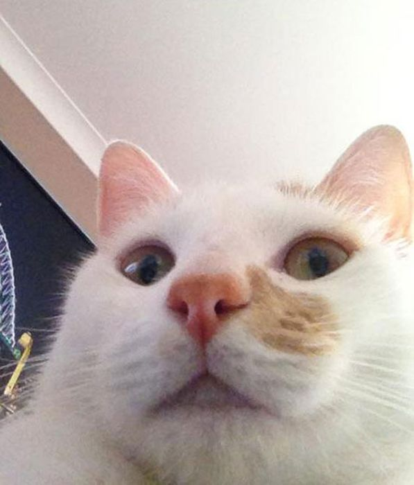 Cats Taking Selfies (28 pics)
