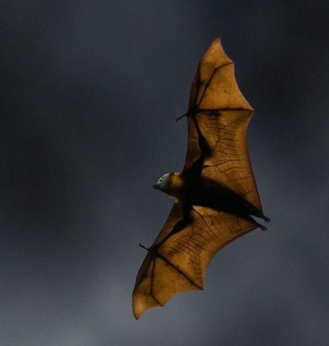 Scary Creatures Living in Australia (27 pics)