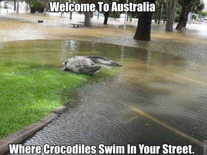 Scary Creatures Living in Australia (27 pics)
