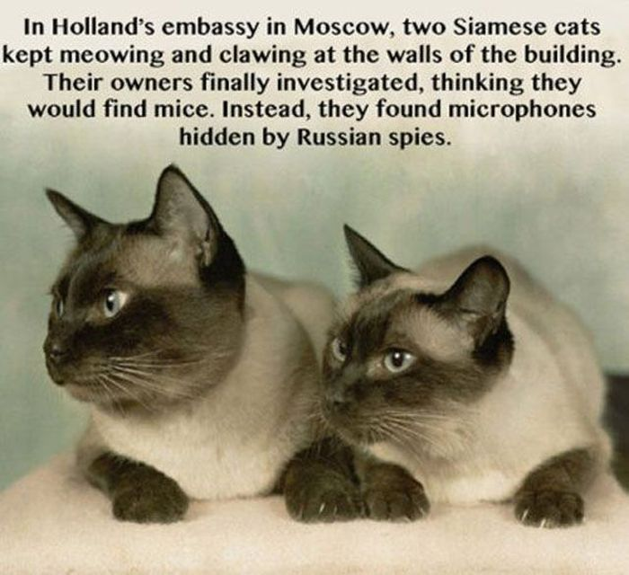 Interesting Facts and Stories That Are Odd (30 pics)