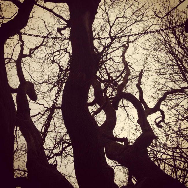 The Chained Oak Legend (5 pics)