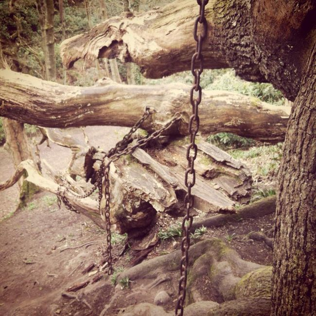 The Chained Oak Legend (5 pics)