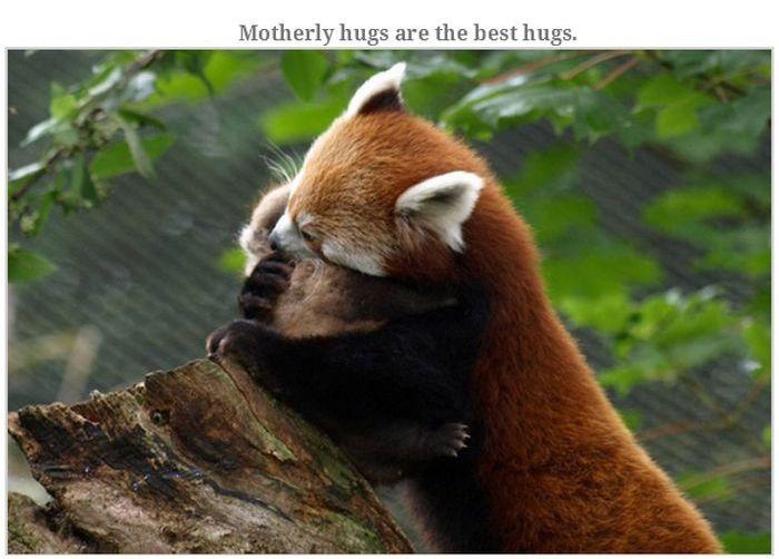 Heart Touching Photos (25 pics)