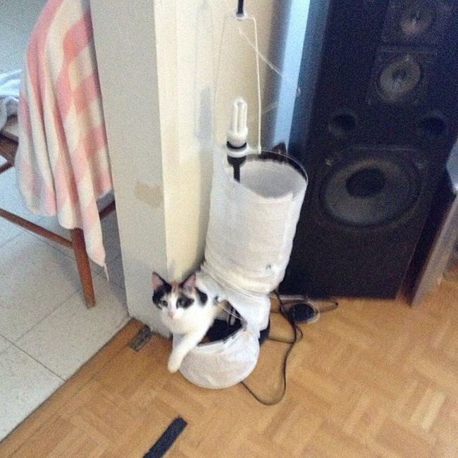 Cats Destroying Things (30 pics)
