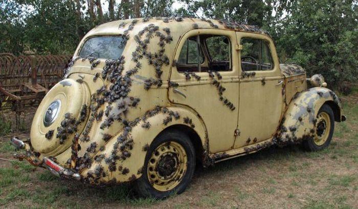 Funny Car-Themed Photos. Part 8 (58 pics)