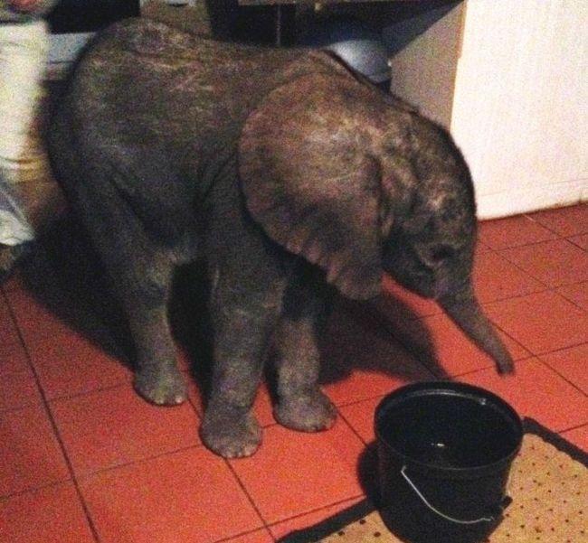 Lost Baby Elephant (14 pics)