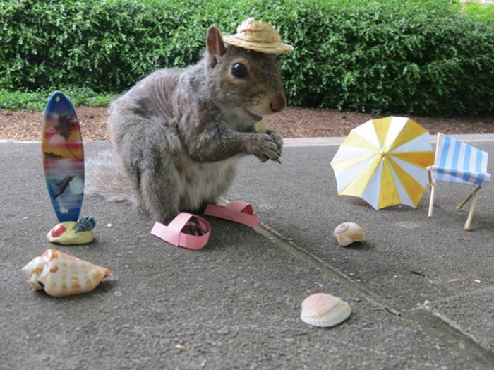 Pet Squirrel (27 pics)